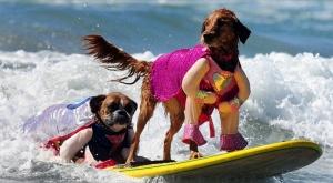 dog surfing1