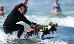 dog surfing2